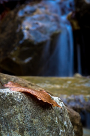 Leaf on a creek
